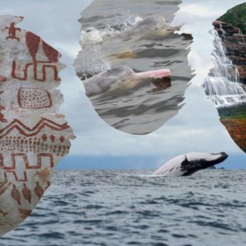 Whales, Dolphins and the Rainbow River!
